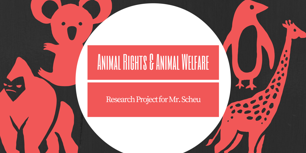 Animal Rights & Animal Welfare